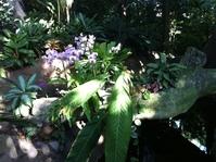 Moody Garden Orchids 8