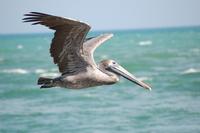 pelican series 4