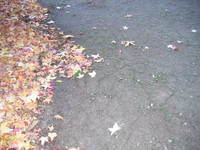 maple path