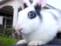 rabbit0 3