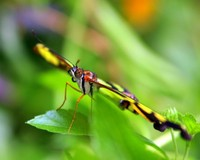 Butterfly Macros 3