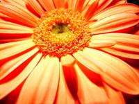 flower2u