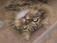 """Tigre"""" my cat"""