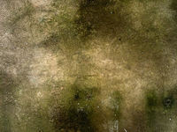 Concrete moss