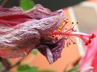 sear flower