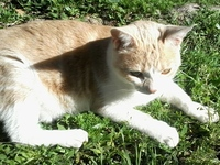 Spontaneous cat 5