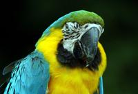 Birds of Paradise 1