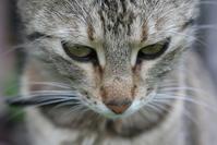 Tha Cat