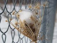 A Flower in Winter