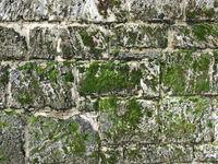 wall moss 2