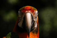 Birds of Paradise 3