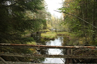 Norwegian autumn 1