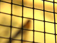 Gefangen (Caged)