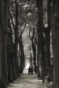 Cemetery Powazki, Warsaw