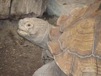 Annoyed Turtle