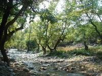 Fonias Canyon 1