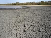 Pantanal salt bay