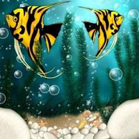 Underwater free photos