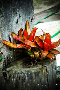 Lomo flower