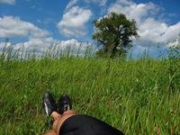 summer field 4