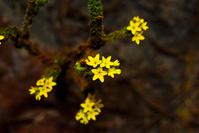Flores do cerrado 4