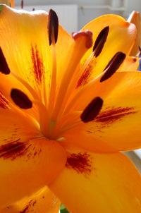 Flower I Closeup