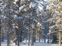 Levi's Landscape, Finland 2