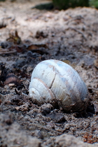 Snail Shell abandoned