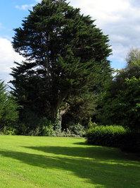 Exeter Tree