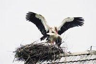 Storks 2