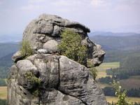 Monkey's Head