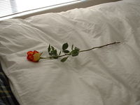 Solitary Flower