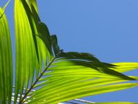 Green Shapes 1