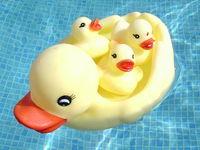 Duck Family 1
