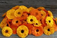 Organic marigold 2