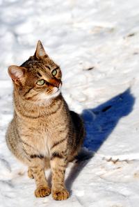 Cat photo 1