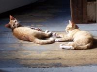 My kittens 1