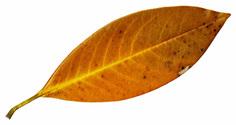 Rough Pastel Leaf 3