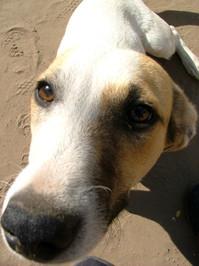 dogy 2