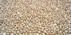 feijao - Bean 1