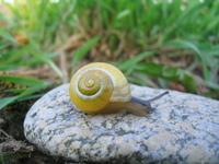 Nice Snail