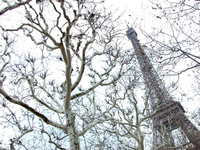 Eiffel Tower & Trees 2