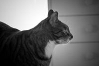 a cat 4