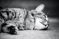 Willow Cat 7