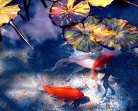 Peaceful Pond 3