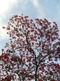 firetree 3