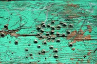Green wood decay texture