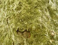 Tree Anatomy 3