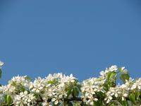 Blossem texture