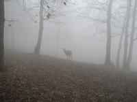deer in the forrest